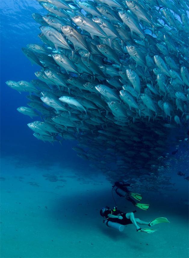 Fish-Tornado-4-640x872